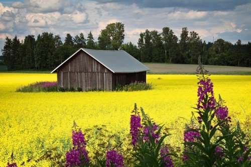 Finland Bright colors of summer.