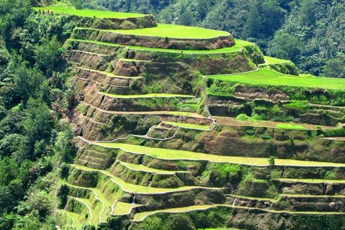 Close-up of the terraces of Banaue, Philippines.