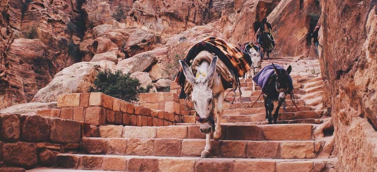 3 donkeys on the steps in Jordan