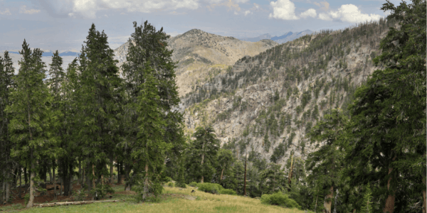 Mount Charleston Video of trees and mountains