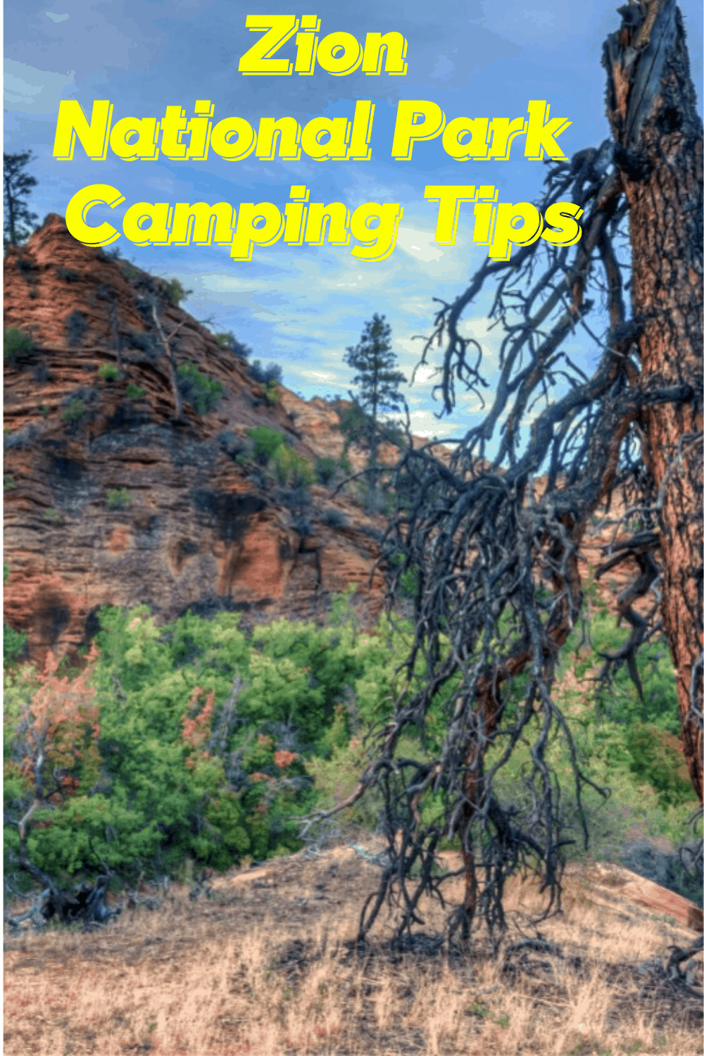 Zion National Park Camping Tips