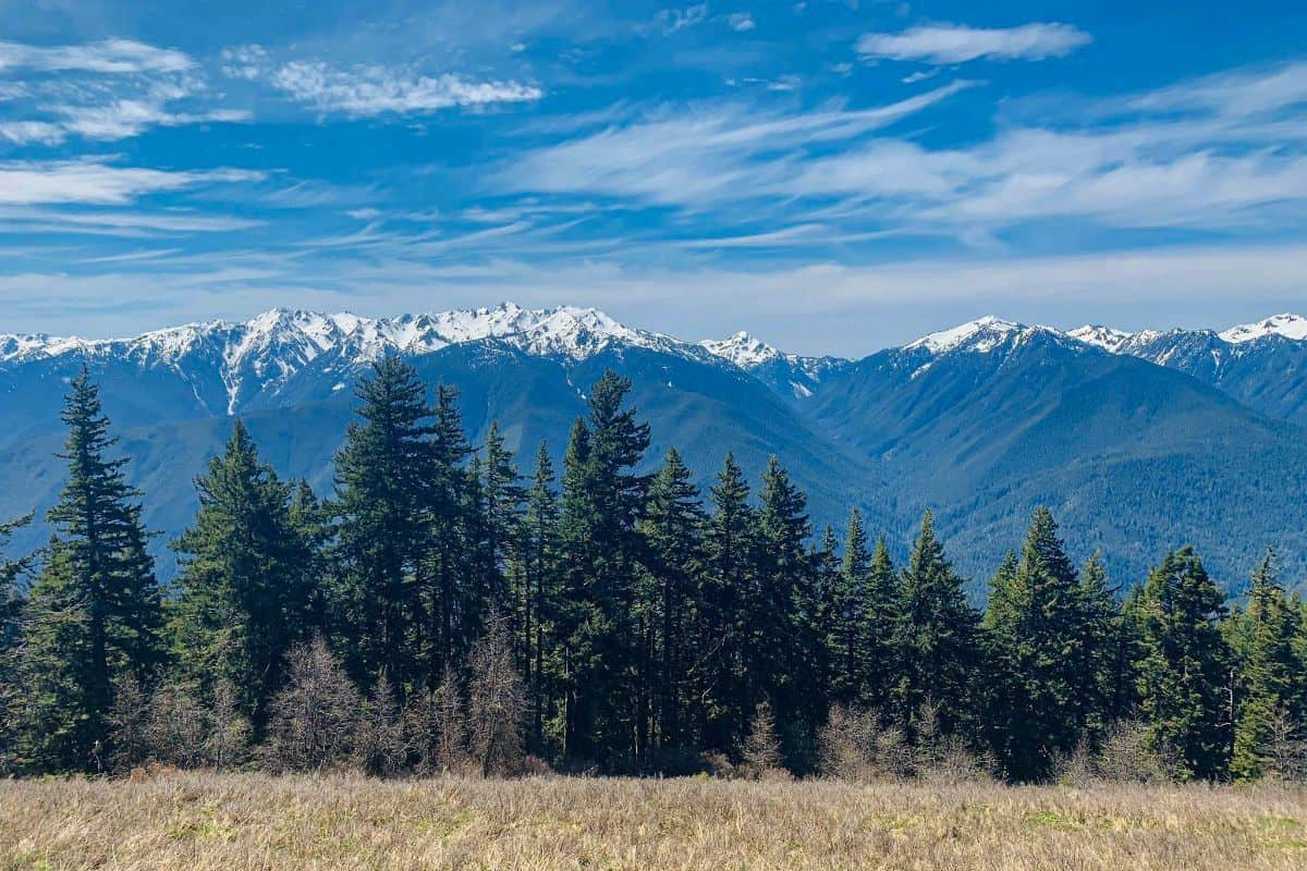 1. Hurricane Hill Trail-1 Olympic National Park