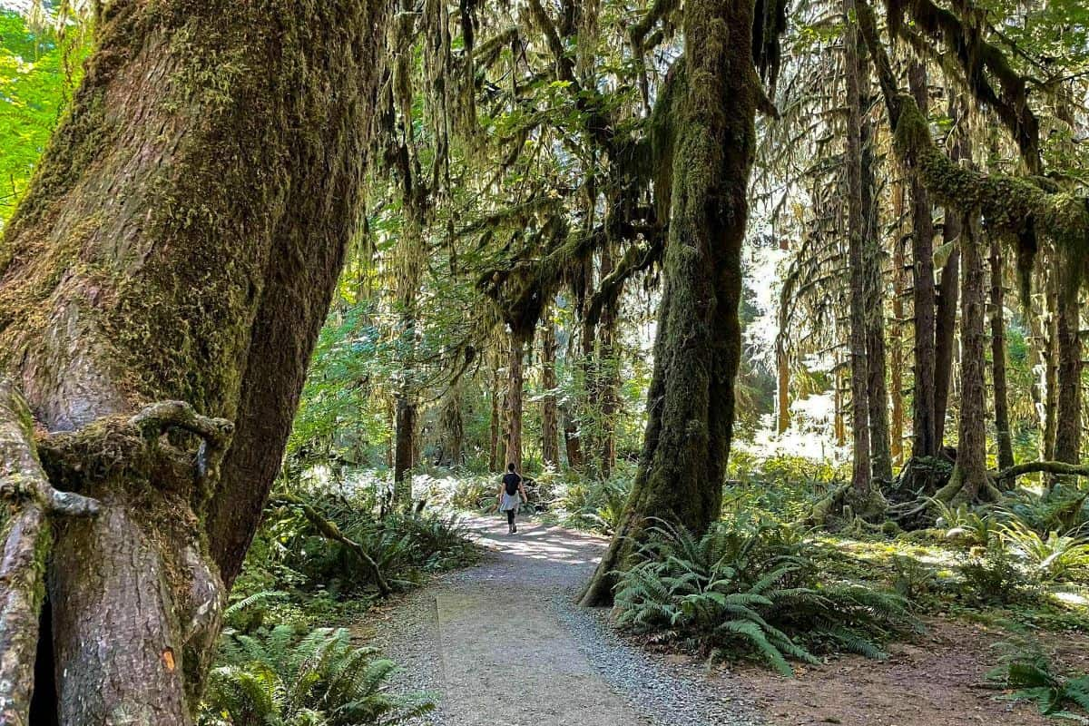 8. Hall of Moss Olympic National Park Boondocking