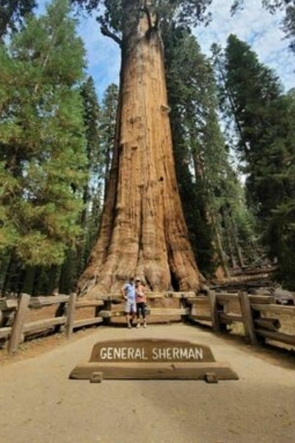 General Sherman - Largest Tree In the World